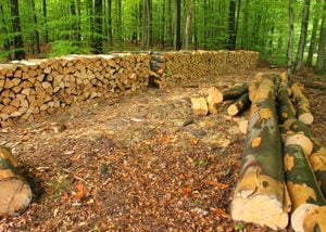Trees Cut Down in Forest
