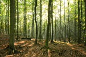 Trees in Forest and Sunlight